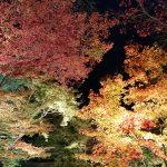 秋の嵐山観光 紅葉が楽しめるスポットやライトアップは?