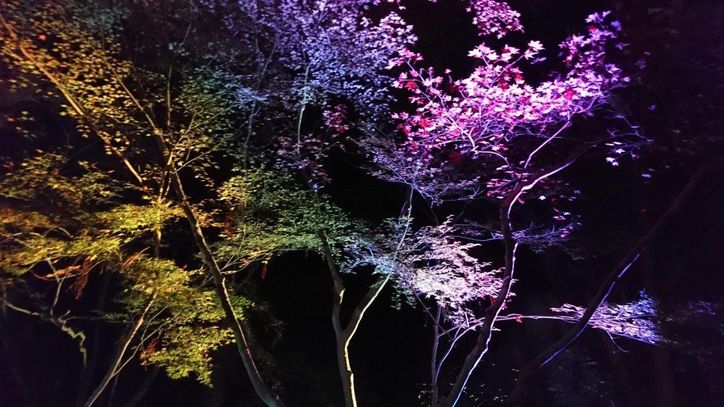 瑠璃光院ライトアップ