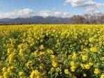 冬・夏に季節の花畑が楽しめる「第一なぎさ公園」アクセスや混雑状況は?